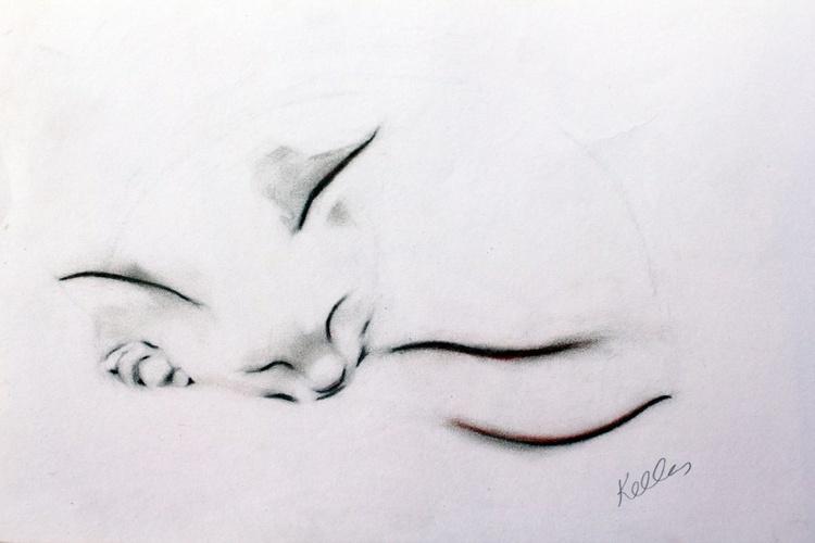 Sleeping Cat - Image 0