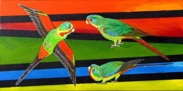 Swift Parrots - Image 0