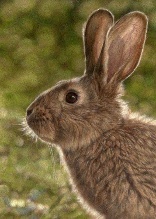 Rabbit I - Image 0