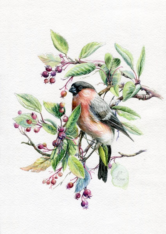 ORIGINAL WATERCOLOR  Bullfinch - Image 0