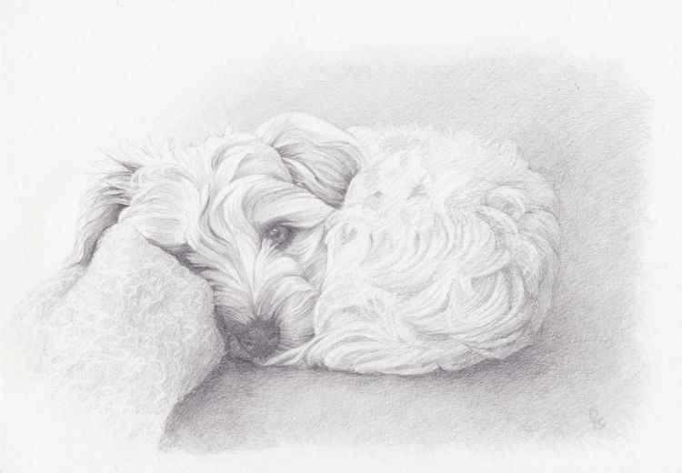 Puppy -