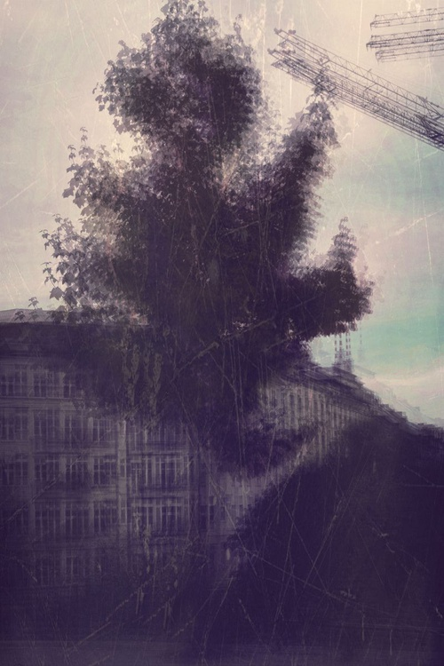 Urban Tree - Image 0