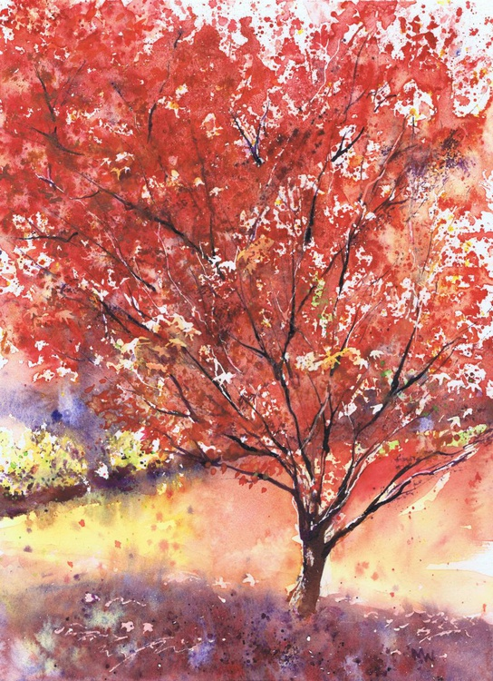 Red Maple - Image 0