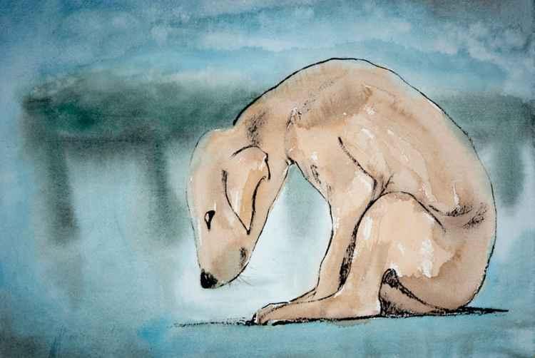 Lorne Puppy -