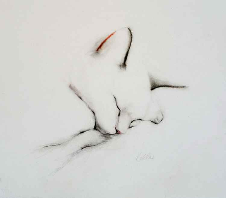 Sleeping Cat in September -