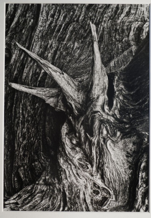 Wooden monster #1 - Image 0