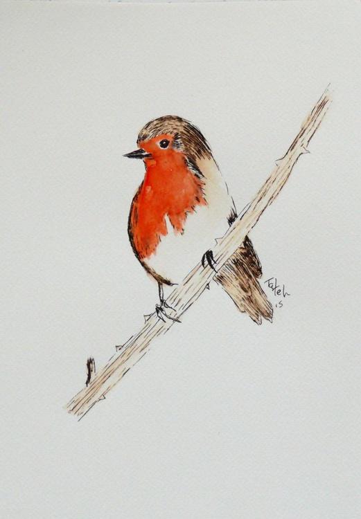 [79] Robin - Image 0