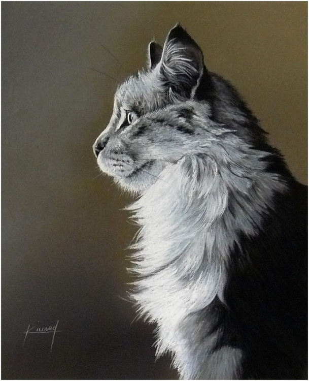 Grey Cat - Image 0