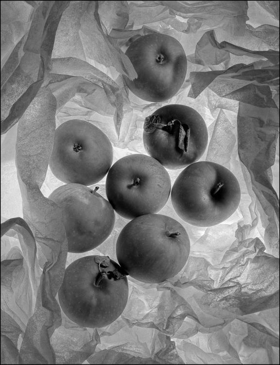 Malus Domestica Rosaceae - Image 0