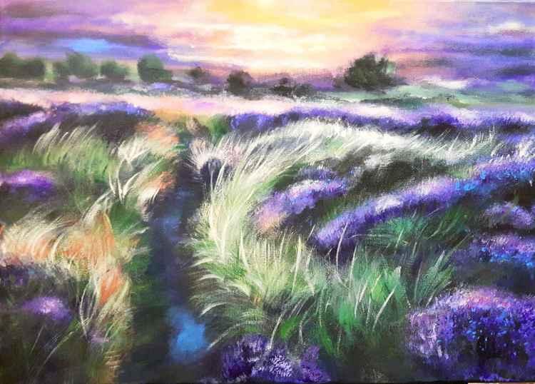 Lavander fields -