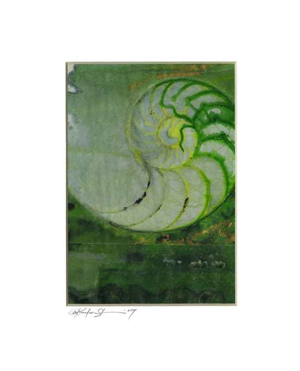 Sea Shell Watercolor Painting, Ocean - Nautilus Shell No. 1083 -