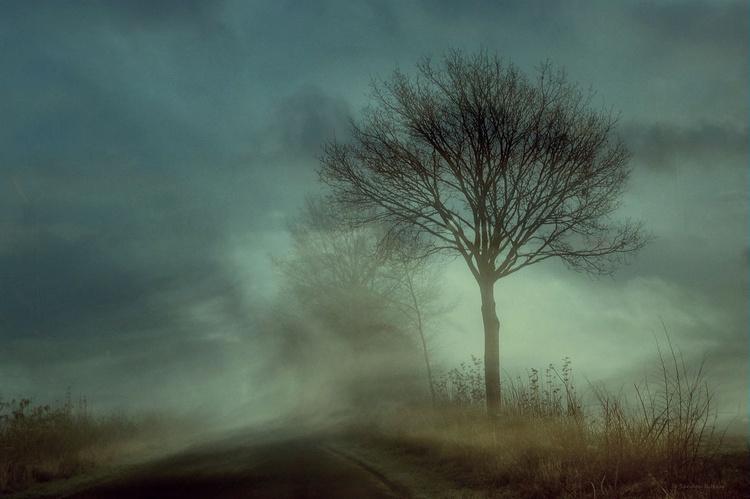 Magic of Dawn - Hahnemühle Photo Rag - Image 0