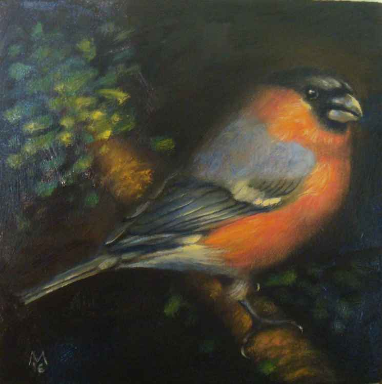 Bullfinch (SOLD) -