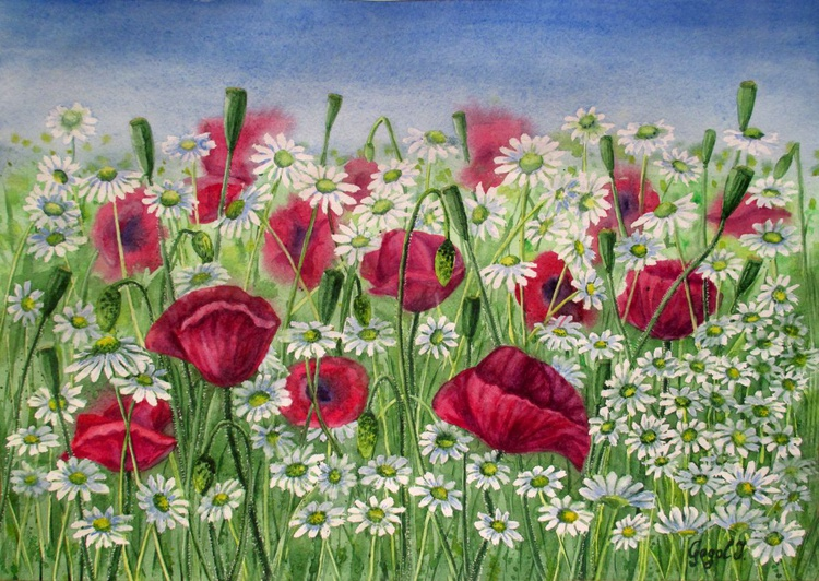 Meeting of poppies and daisies - Image 0