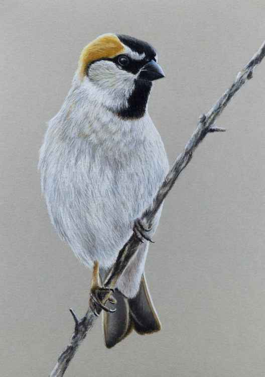 "Original pastel drawing ""Saxaul sparrow"" -"
