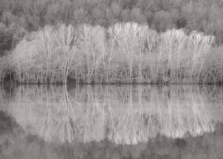 Reflections - Image 0