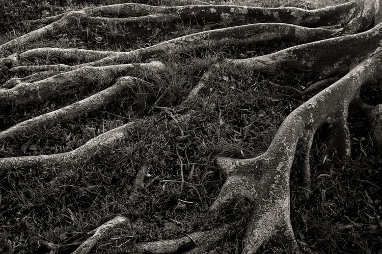 """Roots"" - Image 0"