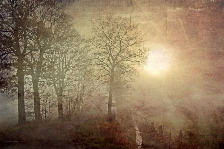 Winter light - Canvas 75 x 50 cm - Image 0