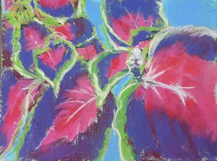 Colorful Coleus -