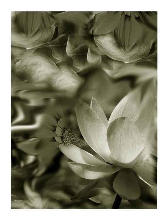 FLOWERS #4