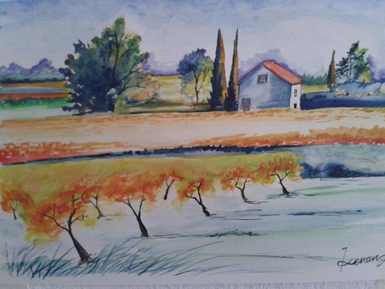 vineyard - Image 0