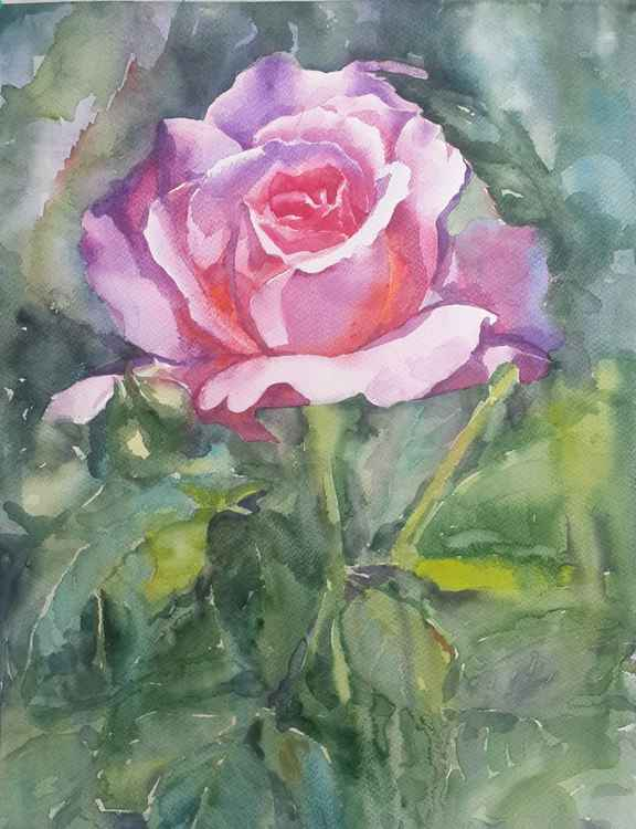 rose flower -