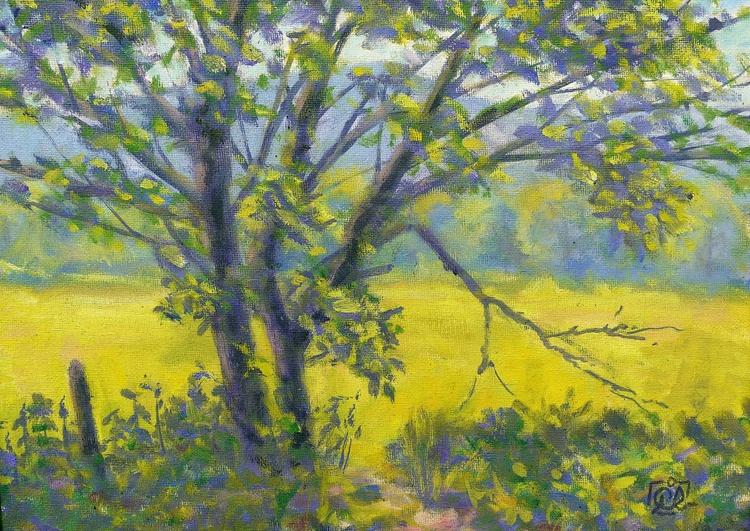 sunny tree - Image 0