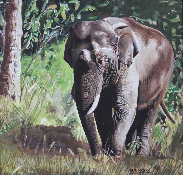 INDIAN ELEPHANT -