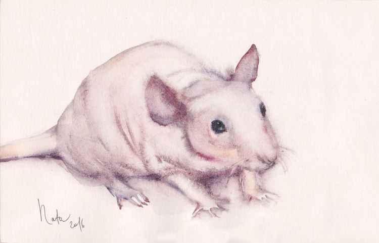 Rat  Patrick