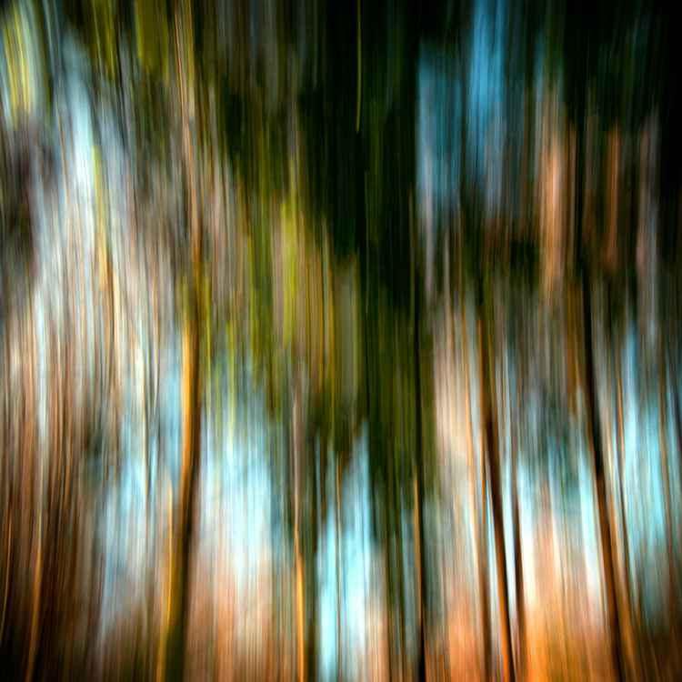 Autumn Colors fig. H -