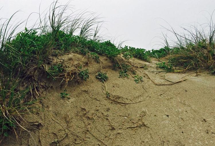 Padre Island 09 - Image 0