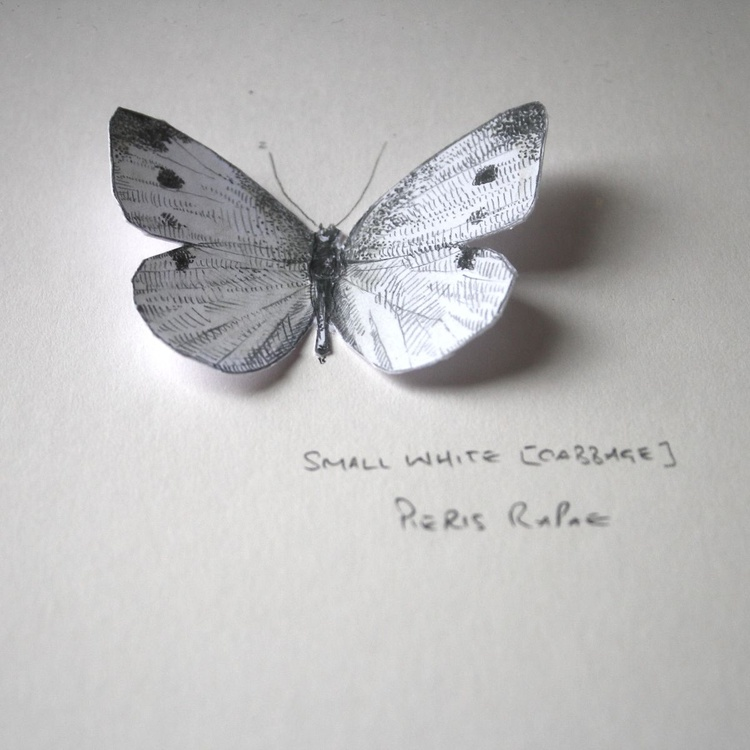 Small White pop-up 3d butterfly - Image 0