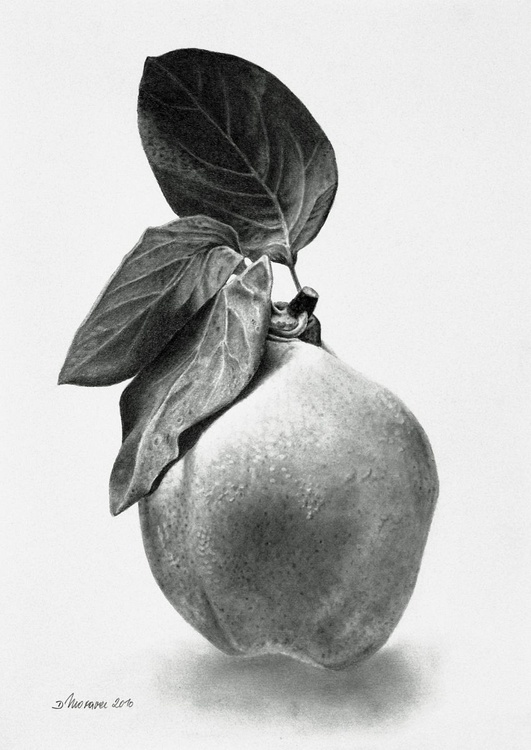 Proud Quince - Image 0