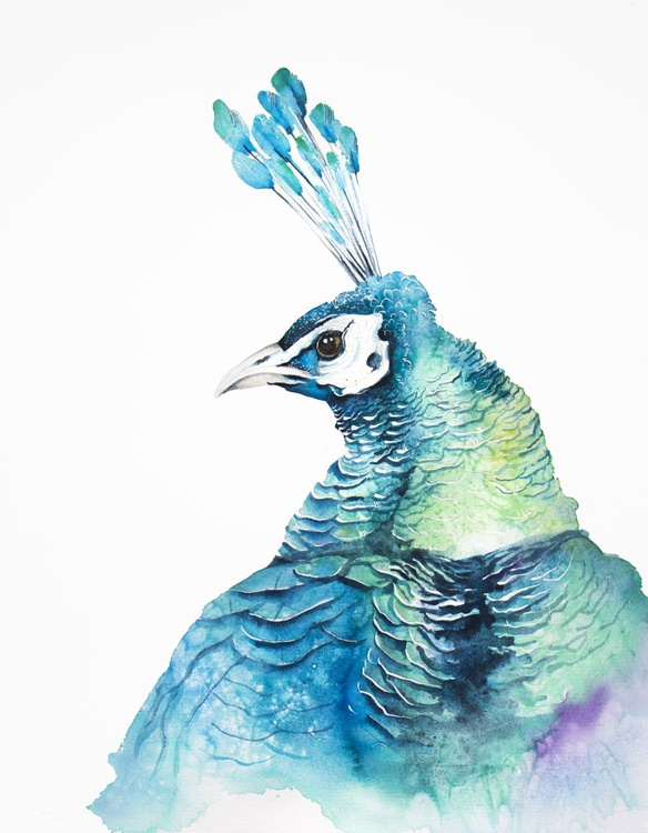 PEACOCK, bird, birds, animals, wildlife watercolour painting, crow - Image 0