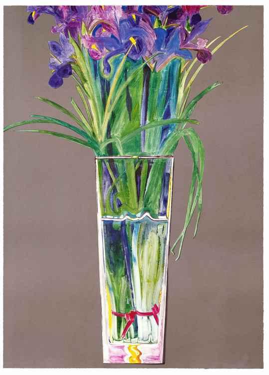 May Iris