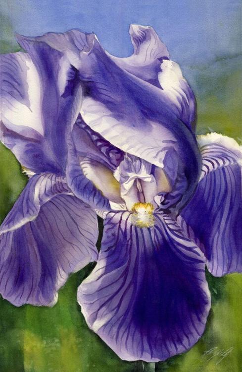 Iris in the wind - Image 0