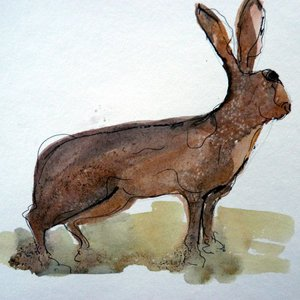 Hare alert by Ruth McCabe