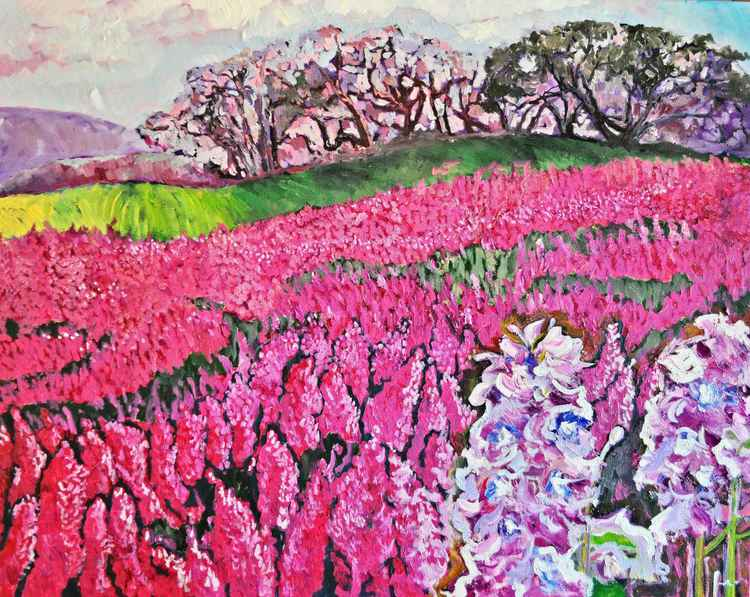Lavendar Fields -