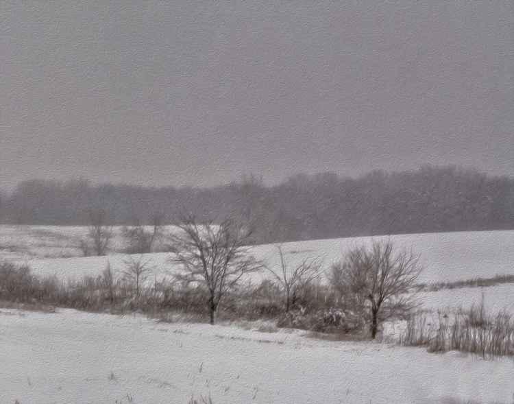 Winter Prairie Landscape -