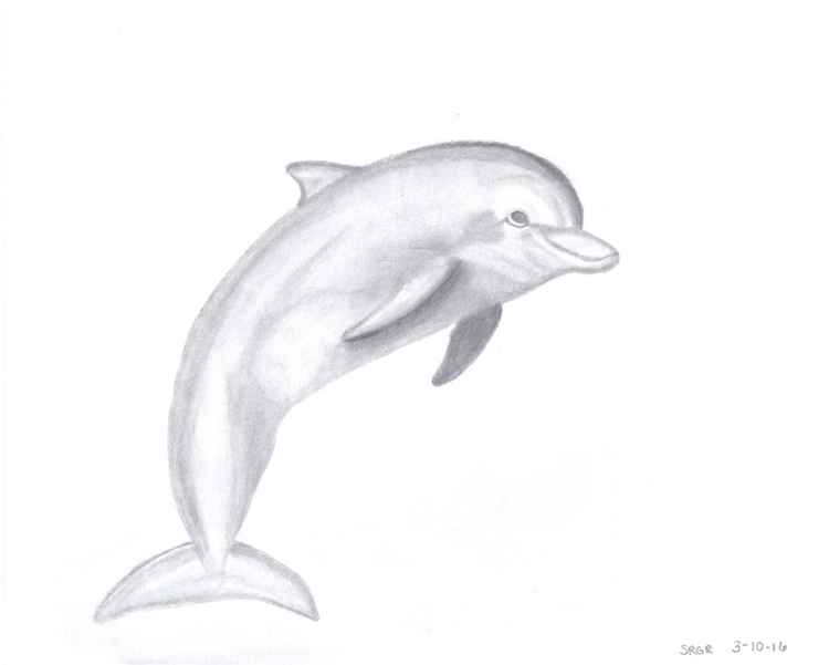 0013 Dolphin 02 Drawing -