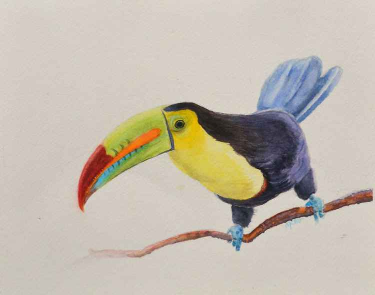 Keel-billed toucan -