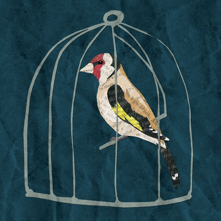Hardy's Goldfinch - Image 0
