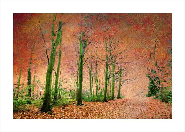 Into the Autumn Wood -