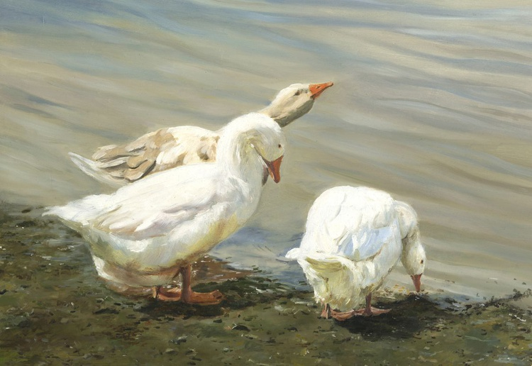 Whitby Geese - Image 0