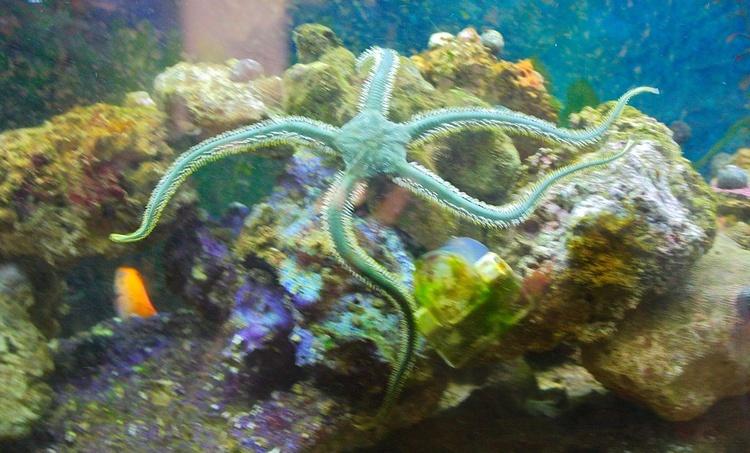 Star Fish Spirit. - Image 0