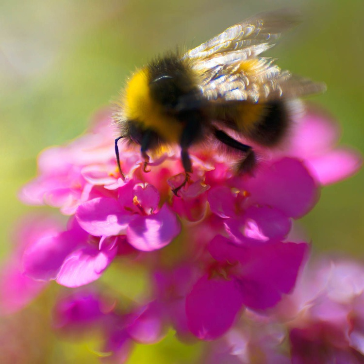 Sprites in the Enchanted Forest  - Bee and Pink - Image 0