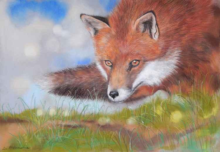Fox -