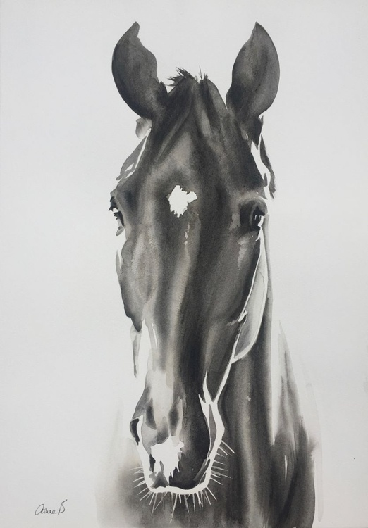 Horse in Black and White - Image 0