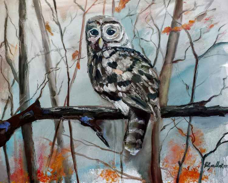 Barred Owl -