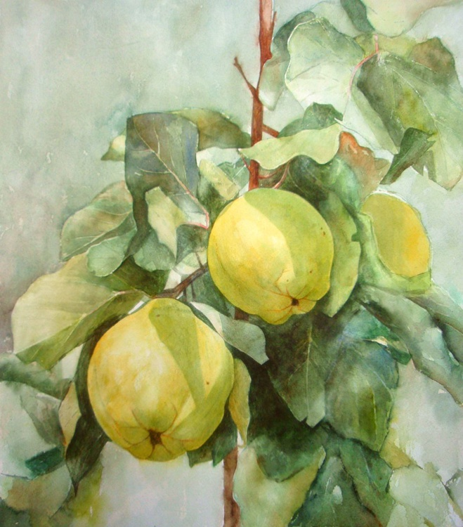 Study of quinces - Image 0